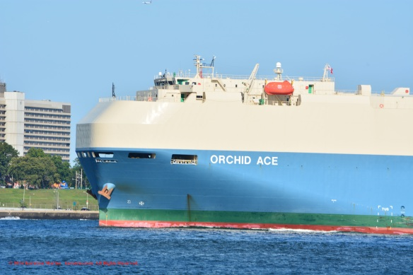 MV ORCHID ACE 4