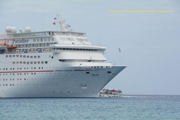 MV CARNIVAL PARADISE 8