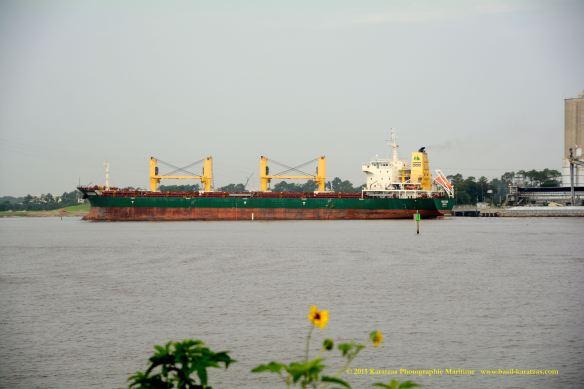 MV HARLEQUIN 10